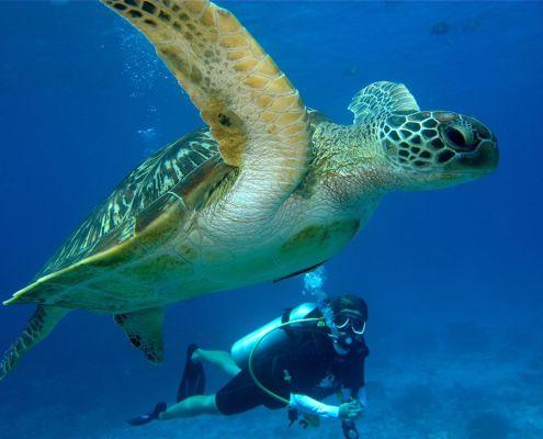 Im Miteinander die Unterwasserwelt erleben