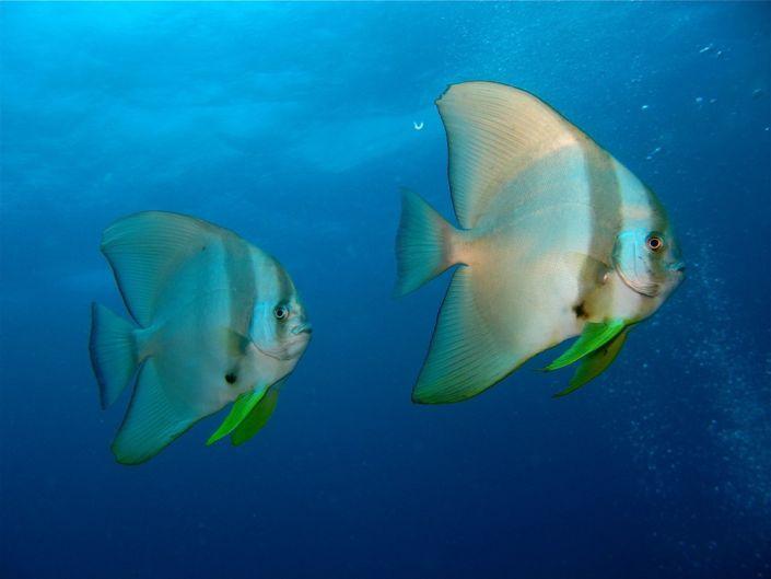 Farbenpracht der Fische