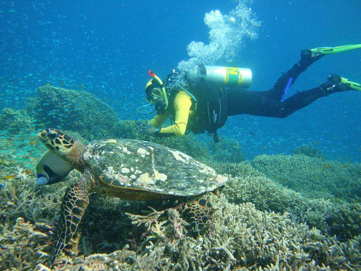 Faszination Tierwelt unter Wasser vor der Küste von Khao Lak