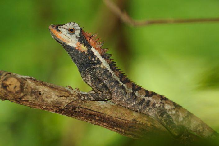 Tierleben im Khao Sok Nationalpark