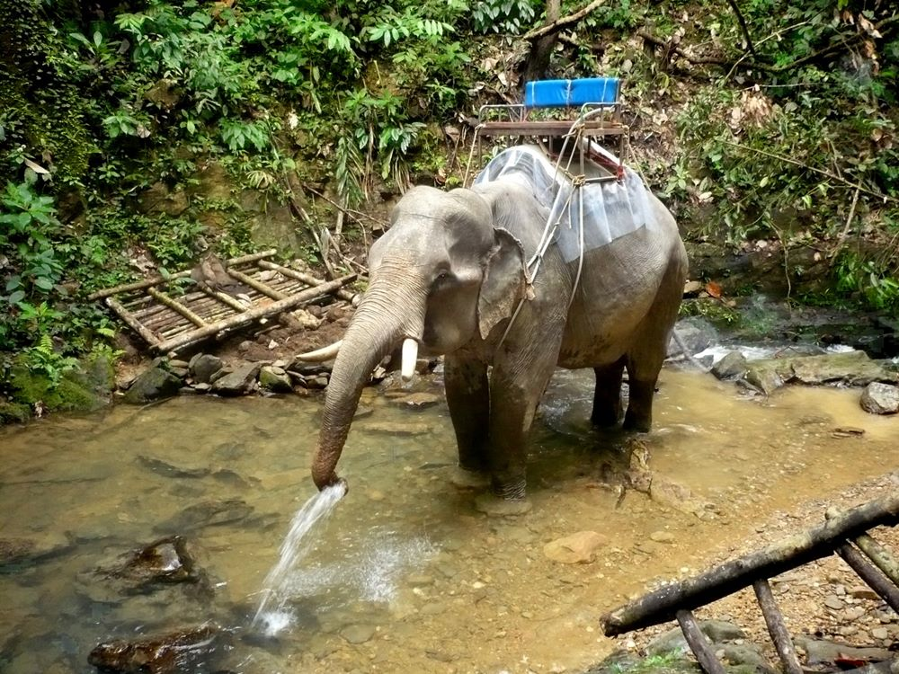 Elefanten im Khao Sok